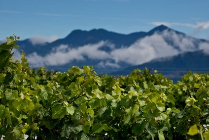 New Zealands vineyards are finding growth overseas