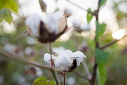 The two-day Sustainable Cotton Forum takes place on 16-17 March