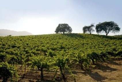 Vintage Wine Estates buys Cohn Winery
