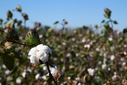 Better Cotton Initiative names McClay CEO