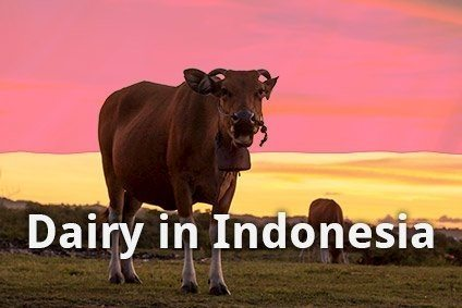 Indonesia dairy faces significant challenges