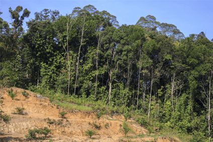 Oxfams report shone spotlight on issues including deforestation