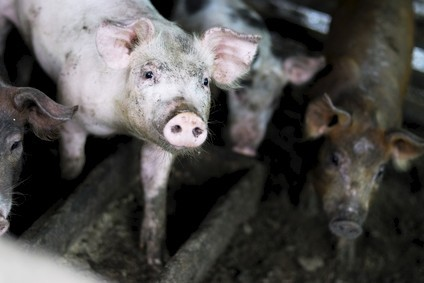 "Sofiprotéol said companies would ""support and promote the quality of pork from Normandy"""