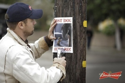 The Lost Dog spot will feature the Clydesdale horses