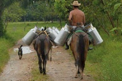 Nestle looks to lift Mexican milk production