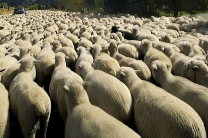 Around 90% of the worlds merino wool comes from Australia and the US