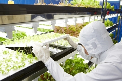 Toshiba Corp. has made its debut in vegetable production