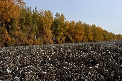 Chinas Xinjiang province is to reduce its total cotton farming area in 2015