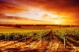Environmental Sustainability in the Wine Sector