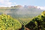 The irrigation of vineyards has become a struggle in several wine regions