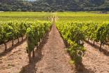 Global wine decline threatens asset-light wineries - study