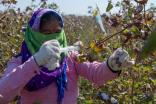 Primark challenges critics with India cotton initiative