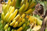Bananas among goods traded between UK and poorest nations