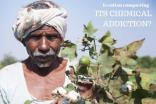 The research reviews pesticide use in global cotton production