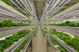 Russias iFarm on whether vertical farming could herald a new era of urban agriculture - interview