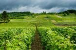 The Champagne region is bracing itself for a battering this year