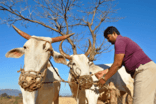 Dairy processors investing in the modernisation of Indian dairy farming