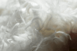 GERMANY: Naturfasern launches responsibly sourced angora fibre