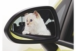 Lagerfeld & Opel team up for cat tatt