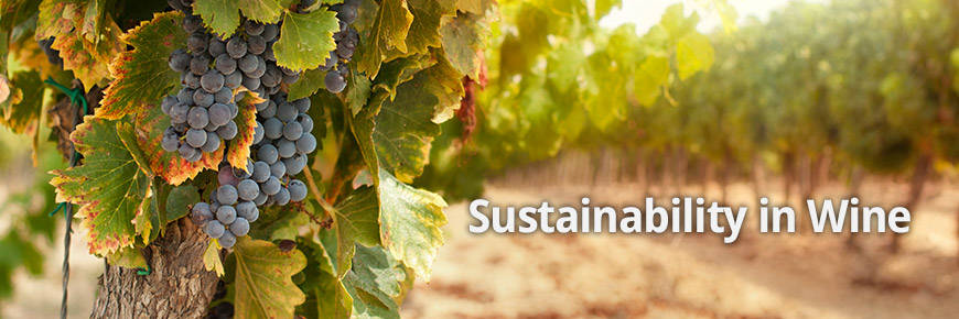 Environmental Sustainability in the Wine Sector - December 2015 Management Briefing