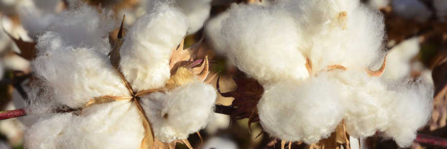 Cheap polyester contributes to shifts in cotton imports