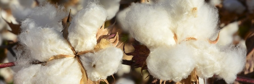 US upgrades Uzbekistan despite cotton sector concerns